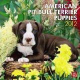 Portada de AMERICAN PIT BULL TERRIER PUPPIES 2012 CALENDAR